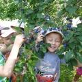 Фотоотчёт о наблюдениях на прогулке. НОД Наблюдения за плодовым деревом— сливой.