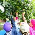 «Высоко на дереве яблоки созрели». Наблюдения на прогулке (фотоотчёт)