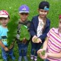 НОД «Такие разные Чудо— листья». Наблюдения с детьми в природе.