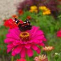 Фотозарисовка «Эти летающие цветы— бабочки…»