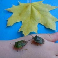Методика проведения наблюдений на прогулке. Наблюдения за насекомыми в осенний период