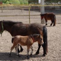Фоторепортаж о посещении фермы мини-лошадок. Мои впечатления