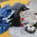 Макет «Животные Антарктиды»