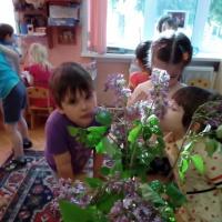 Фотоотчет о проекте «Сиреневый май»