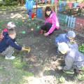 Экологический проект «Наш веселый огород»