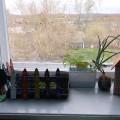 «Огород на окне». Старшая-подготовительная группа