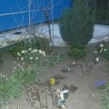 Семейный экологический проект «А у нас во дворе»
