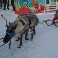 Сибирский фестиваль снежных скульптур в Новосибирске (фоторепортаж)
