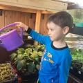 Фотоотчет о краткосрочном исследовательском проекте «Огород на окне». Взаимодействие с родителями (вторая младшая группа)