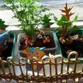 Огород на окошке «Весення фантазия». Экспериментальная деятельность «Мы маленькие исследователи-2» (фотоотчет)