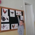 Проект по экологическому воспитанию «Птички-невелички» (фотоотчет)