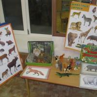Фотоотчёт о тематических неделях «Мир животных»