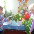 Экологический проект «Комнатные растения»