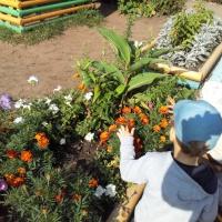 Фотоотчёт «Как мы семена цветов собирали»
