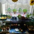 Огород на окне— фотоотчёт