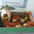 Фотоотчет об осенней выставке «Чудо-овощ, чудо-фрукт»