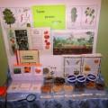 Мини-музей «Такие разные семена»