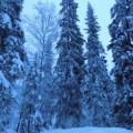 «Магия зимнего леса». Фотозарисовка