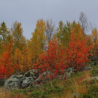 «Яркие краски Мурманской осени»— фотозарисовка