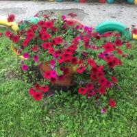 Наш летний мини-огород