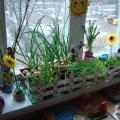 Наш чудо-огород