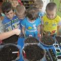 Фотоотчёт о проекте «Огород на подоконнике»