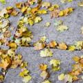 Конспект НОД по формированию целостной картины мира в старшей группе по теме «Осень»