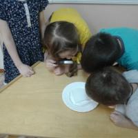 Детское экспериментирование, как условие познавательного развития дошкольников