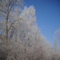 Конспект НОД по лепке «Деревья в снегу» в подготовительной группе