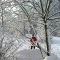 «Опушка зимнего леса». Конспект НОД по рисованию в средней группе