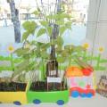 Наш цветущий сад— огород!