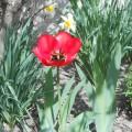 Расцвели у нас цветы, небывалой красоты! (фоторепортаж)