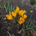 Фотозарисовка «У нас зацвели первые цветы»