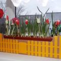 Оформление «Огород на окне и осенние букеты»