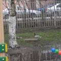 Прогулка «Наблюдение за птицами на участке детского сада» (фотоотчёт)