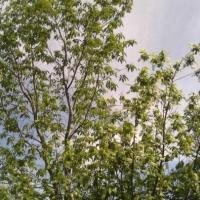 Фотозарисовка «Краски лета»