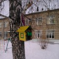 Акция-фотоотчёт «Покормите птиц зимой»