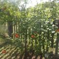 Фотоотчет праздника «Яблочный спас»