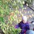 Открытое интегрированное занятие «Вот и осень к нам пришла» (вторая младшая группа)