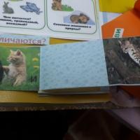 Дидактическое пособие «Лэпбук «Дикие животные» с загадками, раскрасками, рассказами, мнемотаблицами, картинками