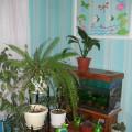 Наша экологическая комната