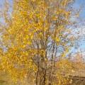 Конспект НОД в младшей группе «Осень золотая»