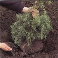 Фотоотчет об акции «Посади своё дерево»