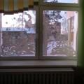 Зимняя сказка… на окнах