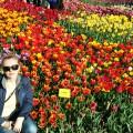 Парад тюльпанов в Никитском ботаническом саду (фотозарисовка)