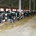 Откуда берётся молоко? Фоторепортаж