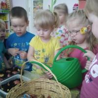 Фотоотчет о реализации педагогического проекта в первой младшей группе «Огород на окне. Лук— от семи недуг»