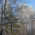 Фоторепортаж «Зимняя сказка на нашем участке»