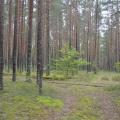 Авторские зарисовки. Экология деревенской жизни. Себежский лес