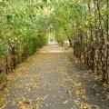 Осенняя прогулка с детьми старшей группы